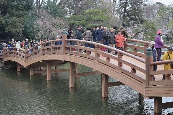 洗足池公園の「池月橋」20年ぶりのリニューアル!