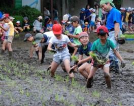 小学生など約1500人が田植えを体験!