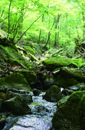 「道志村の水源林」原稿用小