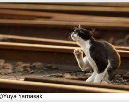 「鉄道」 と 「猫と鉄道」写真展