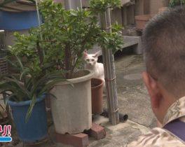 笹塚で猫を撮るネコフォトグラファー ほか 9/19放送内容