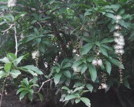 「さがり花&マングローブの林 西表島にて」など視聴者の皆様からの映像をお伝えします。  10/16(月)~放送内容