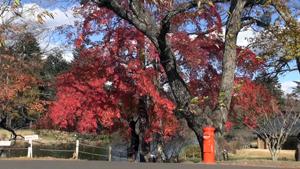晩秋の軽井沢めぐり
