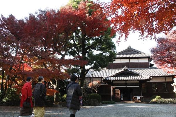 重要文化財『旧朝倉家住宅』で紅葉が見頃を迎えています!