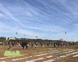 「第37回新春凧揚げ大会」を取材しました!