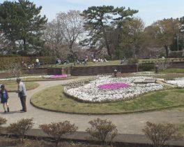 「大田区 多摩川台公園」など視聴者の皆様からの映像をお伝えします。  3/26(月)~放送内容