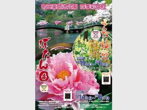 町田薬師池公園 四季彩の杜 ぼたん園・えびね苑 開園