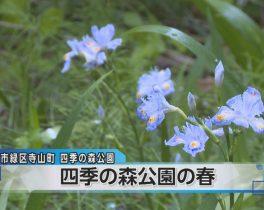 四季の森公園の春ほか4/12放送内容(11ch)