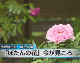 ぼたん園開園ほか4/19放送内容(10ch)