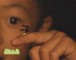 市民健康の森でホタル鑑賞会「ヒカリノモリへ」を取材しました!