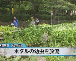 洗足池にホタル幼虫の放流ほか6/15放送内容(10ch)