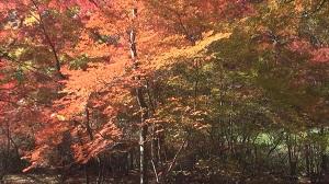 雲場池(軽井沢)の紅葉