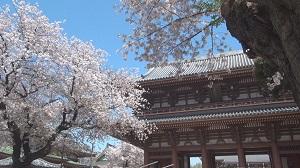 春の本門寺