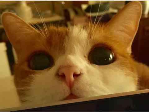 にゃんこまつり 猫好きさん集まれ!