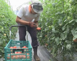 農とあゆむまち~青葉区・最先端農業への挑戦~