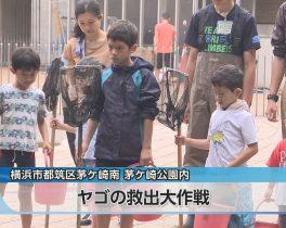 ヤゴの救出大作戦ほか6/18放送内容(11ch)