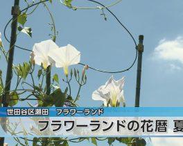 フラワーランドの花暦 夏ほか8/14放送内容(11ch)