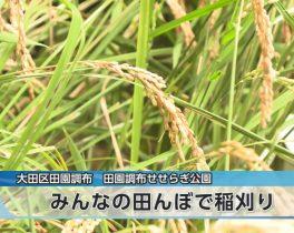 みんなの田んぼで稲刈りほか10/12放送内容(11ch)