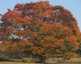 「秋うらら 昭和記念公園」など視聴者の皆様からの映像をお伝えします。11/18(月)~放送内容