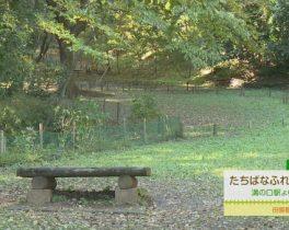 たちばなふれあいの森【神奈川】 12/2 ~放送内容