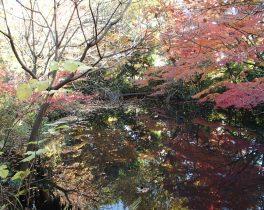 世田谷区の特別保護区 秋の一般開放