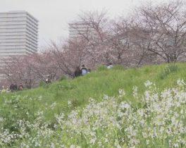 【3月 後半】お花見シーズン到来!大田区のお花見スポット