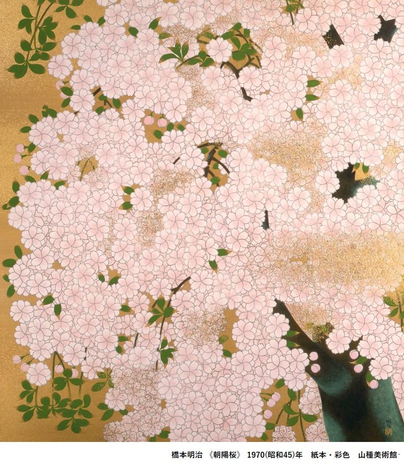 桜 さくら SAKURA 2020 ―美術館でお花見!―