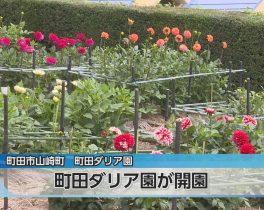 ダリア園オープンほか7/2放送内容(11ch)