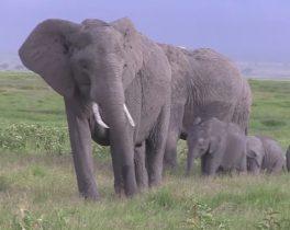【1/18~放送内容】「魅惑の大地ケニア」など投稿映像をお届け!