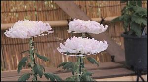 池上梅園の菊花展