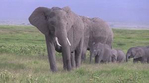魅惑の大地ケニア
