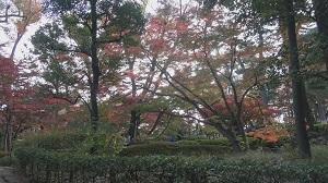 大田黒公園 紅葉とライトアップ