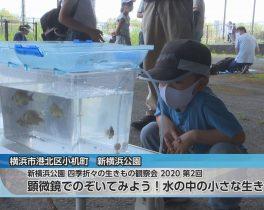 新横浜公園 四季折々の生きもの観察会 2020 第2回 顕微鏡でのぞいてみよう!水の中の小さな生きものほか9/14放送内容(11ch)