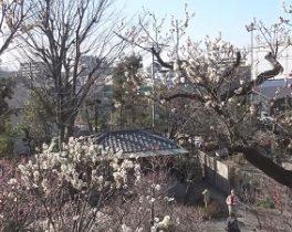 【1/25~放送内容】「池上梅園」など投稿映像をお届け!