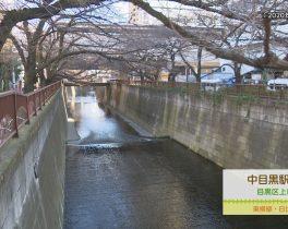 【3/1~放送内容】中目黒駅周辺