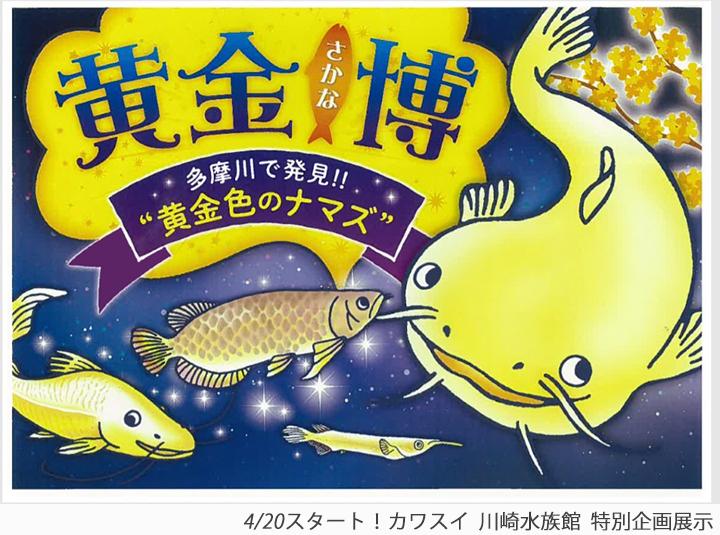 """《イベント情報》黄金さかな博~多摩川で発見!!""""黄金色のナマズ""""~"""